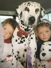 Lady our Dalmatian was very much a part of our family.