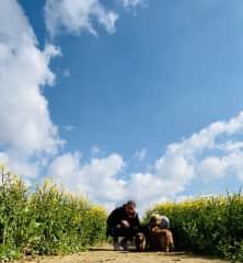 Walking in the fields with short long dogs in Norfolk