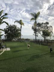 This is the on-site dog park right by the condo! :)