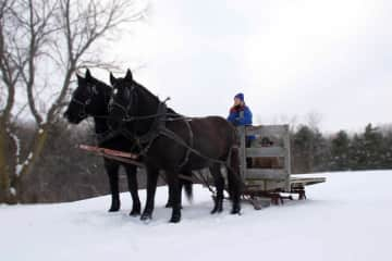 Karin driving her geldings Prinz and Smokey to a bobsled