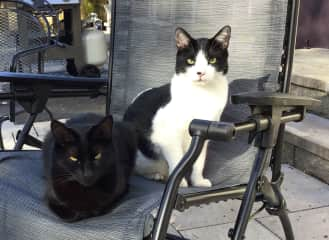 Both of our cats