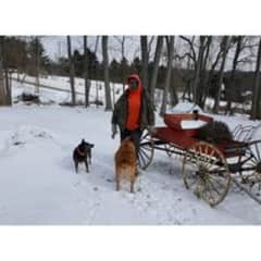 A winter's day with two of my heelers.