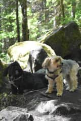 Our dogs, Peanut and Milo on a hike!