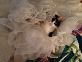 Juno in petticoats