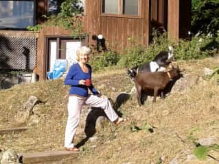 Coffee with the goats, Willie and Winky, Charleston Lake, Canada