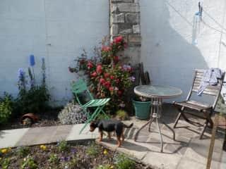 Tarka in the garden