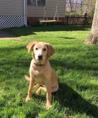 Tessie in the back yard
