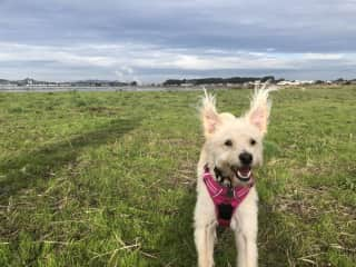 Luna loves nothing more than running her little heart out at the park or the beach.