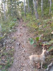 Morning bush walk with Queenie, Marvin, Horace, Soda and Charlotte