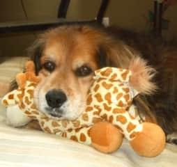 Auggie Doggie and his Giraffe