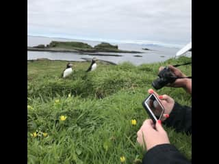 Regardless of the type of animals, taking a van, ferry, and hiking up a cliff to meet Puffins was extraordinary.