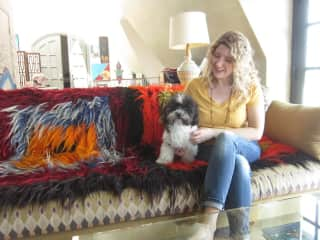 Sitting for a great Havanese
