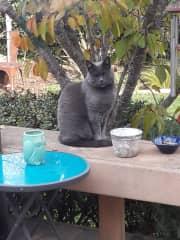 Fiona meditating