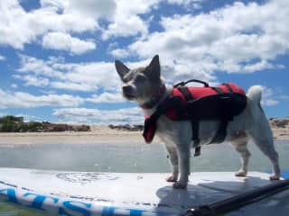 Zippy paddle boarding