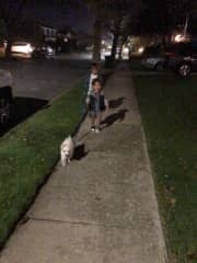 My boys walking their furry sister