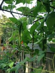 My garden 2018