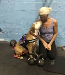 taking my foster dog to the gym.