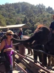 Thailand Elephant Farm