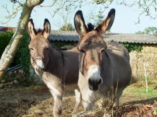 Loved having donkeys