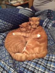 The ginger ninjas... Ernie on left, Hamish on right