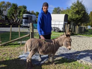 Buddy caring for a donkey at a farm in New Zealand.