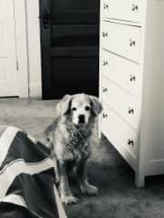14 year old Alfie