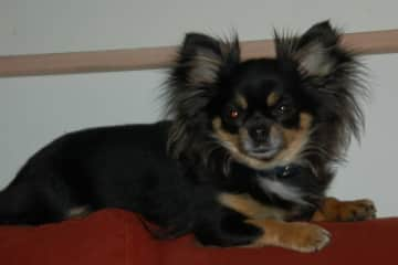 This is my roomade in Iceland, the best dog of the world, every houshold should have a Úa.
