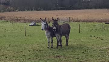 Our donks that we foster from The Donkey Sanctury charity