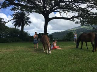 I love horses and love connecting with them in freedom work with them only based on trust and allowance