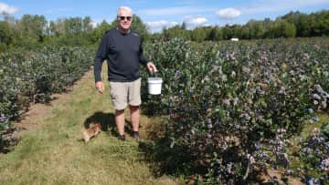 Bill and Zippy blueberry picking.