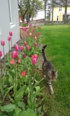 Máni on garden-patrol duty