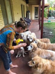 Me and lots of Retrievers talking about restraint!