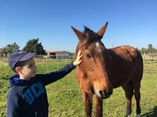 My son petting Jade, my parents pet horse.