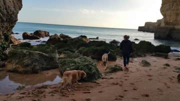 Walking with the dogs during one of the Portugal housesits. (Caminar con perro en Portugal)