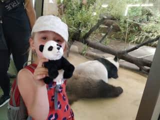 Wisitting pandas in VIenna :-D