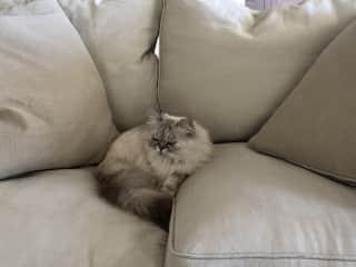 Mila having a cosy on the sofa
