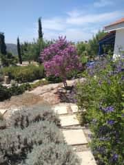 The garden has matured a lot since the previous photos.