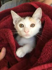 Chrystal was a rescue kitten who came home with ringworm. The owners needed me to give daily medicated baths. When the family returned from vacation, Chrystal's ring worm was gone, plants were thriving and the house was organized and spotless.