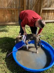 Bath time for Koda after playtime in her Richmond Virginia backyard.
