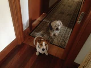 """""""Bertie"""" & """"Carl"""" waiting for instructions!"""