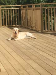 Laika, our Golden Retriever, sitting on the deck