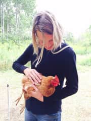Getting to know the chickens at a wonderful farm I live nearby. I have experience tending gardens and caring for animals (rabbits, ducks, chickens) on small farms.