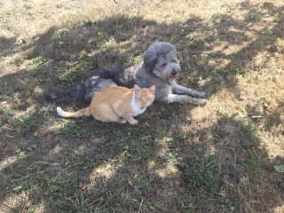 The gorgeous Cinza and Tigs the cat in Portugal