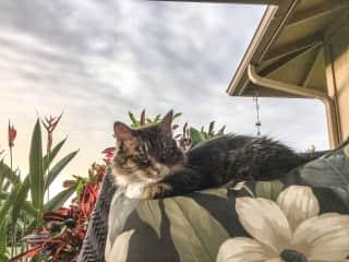 Beanie comfortable in her 'hood!