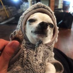 Fifi in her winter jacket.