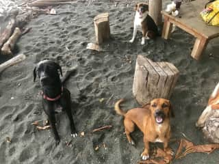 The 3 dogs and me loving the beach life