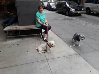 Walking two great  dogs in New York City.