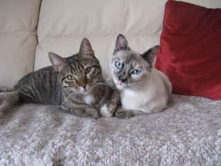 Miele and Rambo