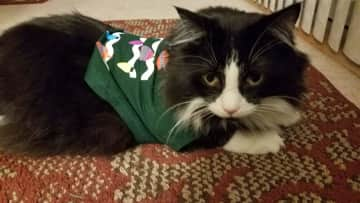 Archie in his Holiday sweater