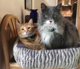 Taj and Sammy hanging in one of their beds